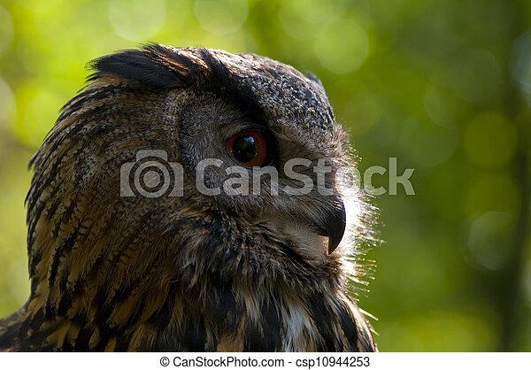 Buho Águila - csp10944253