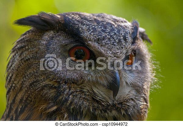 Lechuza de águila - csp10944972