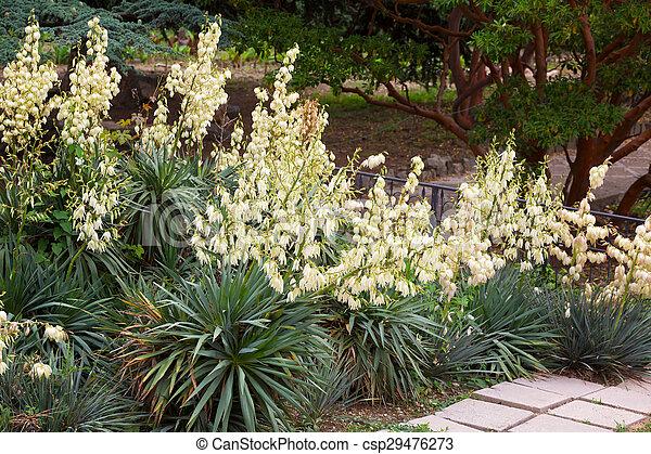 B sche yucca bl hen botanischer garten for Garten yucca ableger