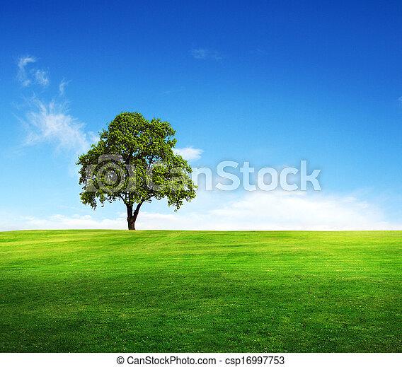 błękitne niebo, pole, drzewo - csp16997753