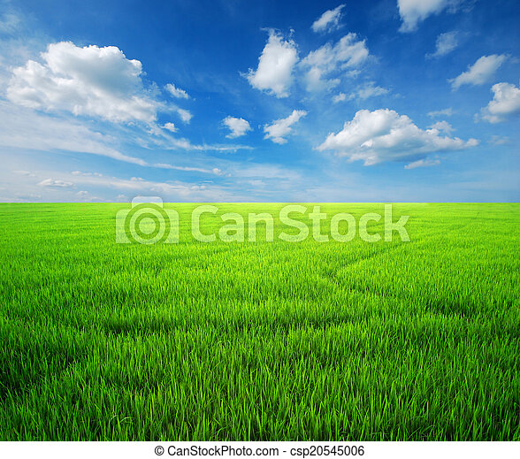 błękitny, ryż, niebo pole, zielona trawa - csp20545006