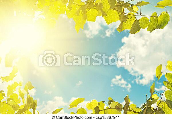 błękitny, tło., liście, niebo, światło słoneczne - csp15367941