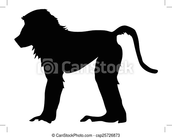 baboon - csp25726873