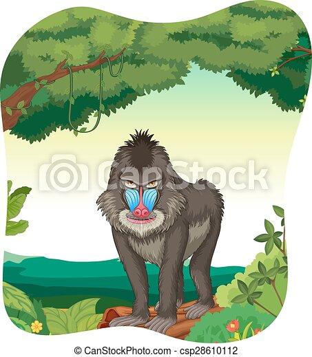 Baboon - csp28610112