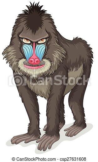 Baboon - csp27631608