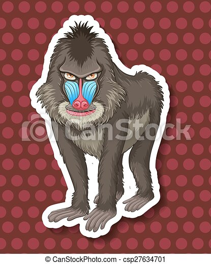 Baboon - csp27634701