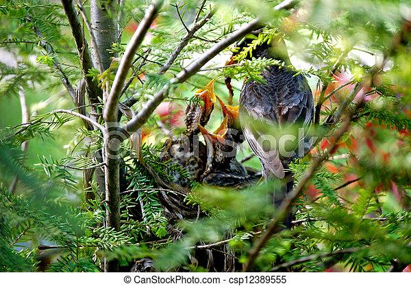 Baby birds being fed-1-1 - csp12389555