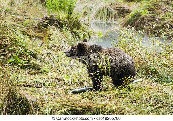 Baby Brown Bear - Enjoying Lunch - csp19205780