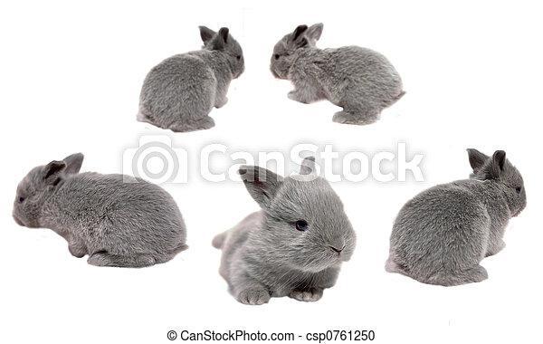 Baby Bunnies - csp0761250