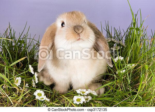 Baby bunny - csp3172135