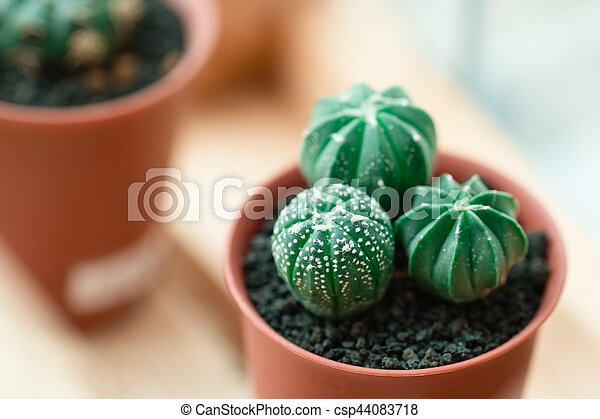 Baby Cactus In Lovely Potted On Wooden Canstock