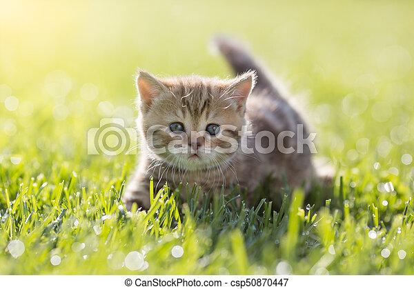 Baby cat in green grass - csp50870447
