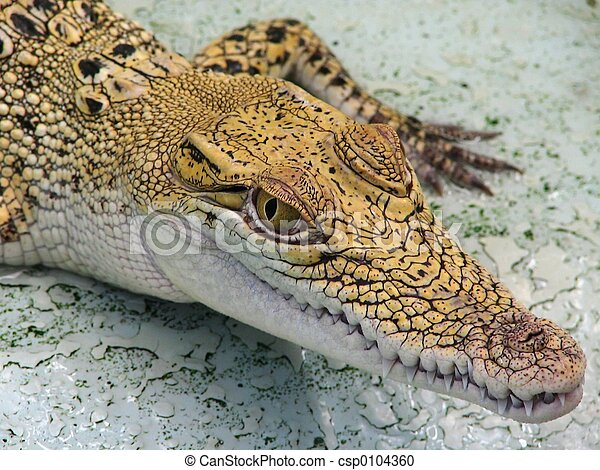 philippine crocodile stock photos and images 16 philippine crocodile pictures and royalty free photography available to search from thousands of stock - Crocodile Bebe