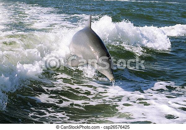 Baby Dolphin - csp26576425