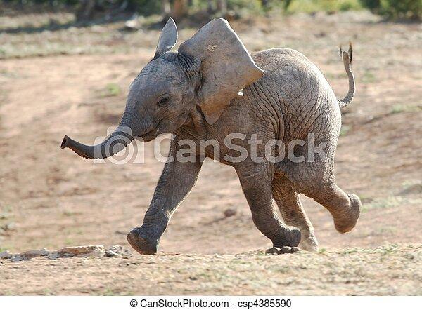Baby Elephant Running - csp4385590