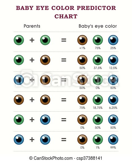 Baby Eye Color Predictor Chart Template Eps Vector  Search Clip Art