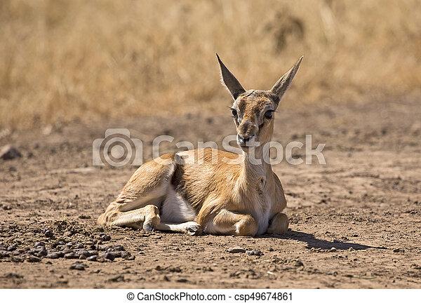 Baby gazelle - csp49674861