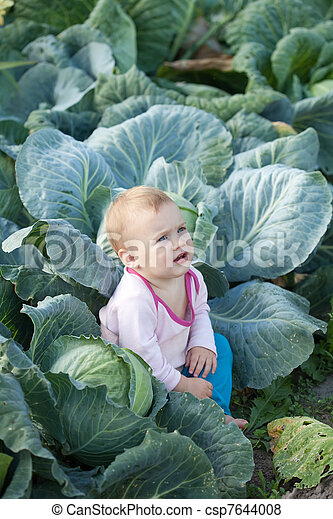 Baby  in  cabbage plant - csp7644008