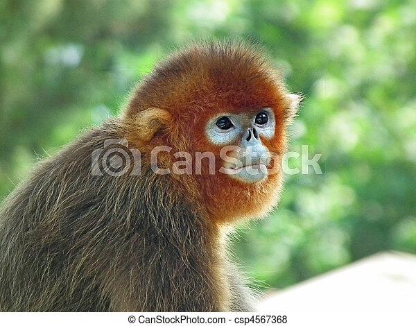 baby monkey - csp4567368