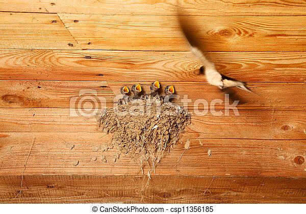 baby, nest, zwaluw, vogels - csp11356185