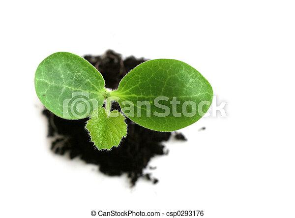 Baby Plant - csp0293176