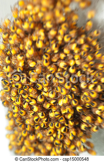 Baby spiders in motion - csp15000548