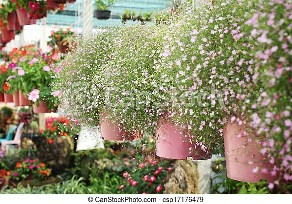 Pink babys breath flowers in the garden picture search photo babys breath flowers csp17176479 mightylinksfo