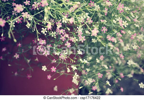 Pink babys breath flowers in the garden stock photo search babys breath flowers csp17176422 mightylinksfo