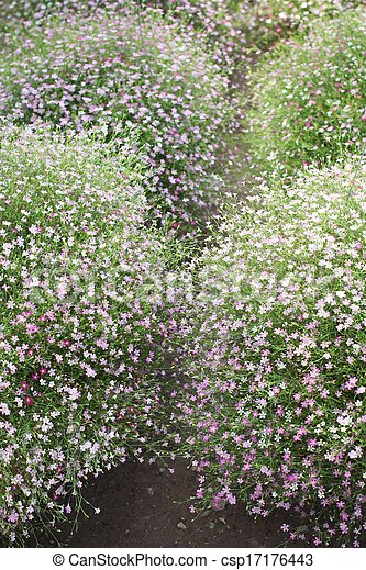 Pink babys breath flowers in the garden stock photo search babys breath flowers csp17176443 mightylinksfo
