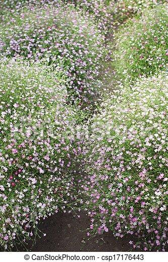 Pink babys breath flowers in the garden stock photo search babys breath flowers csp17176443 mightylinksfo