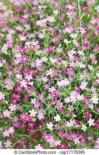Pink babys breath flowers in the garden stock photographs search babys breath flowers csp17176395 mightylinksfo