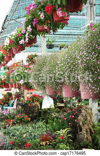 Pink babys breath flowers in the garden stock photographs search babys breath flowers csp17176495 mightylinksfo