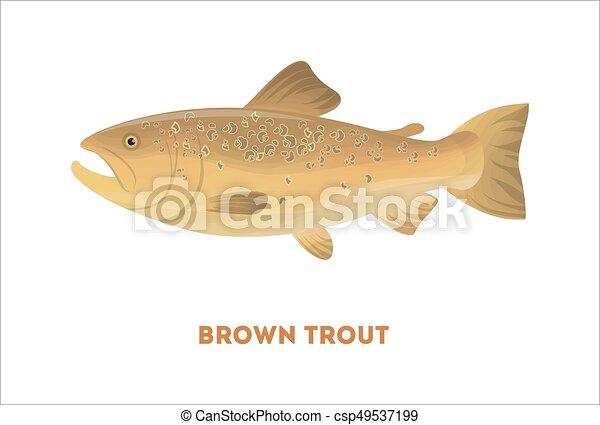 Brauner Forellenfisch. - csp49537199