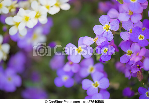 Backdrop Of Purple And White Flowers Backdrop Of Small Purple And