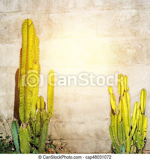 Background block wall has 2 cactus tree - csp48031072