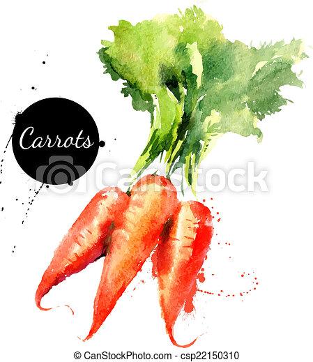 background?, carrots., mano, acquarello, disegnato, bianco, pittura - csp22150310