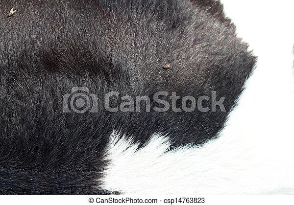 Background cow fur.  - csp14763823