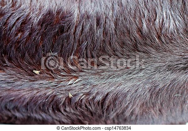 Background cow fur.  - csp14763834