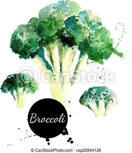 background?, hand, watercolor, broccoli., getrokken, witte , schilderij - csp22844126