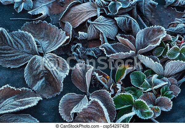 background of autumn leaves in the frost - csp54297428