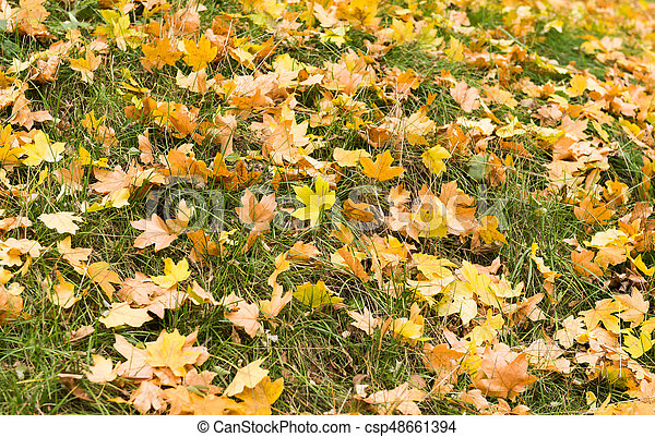 Background of autumn leaves on grass - csp48661394