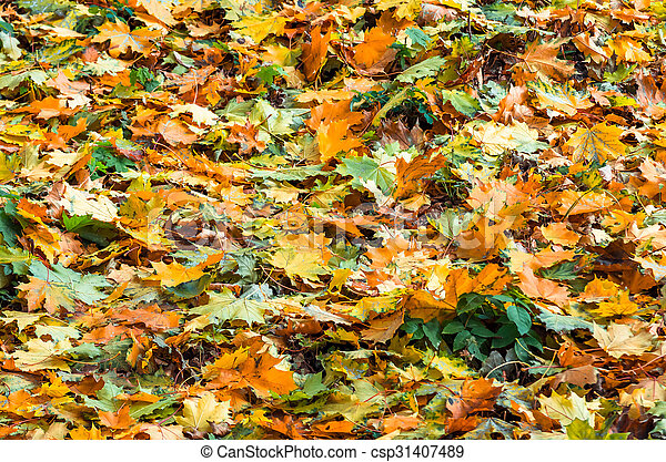 Background of autumn yellow green leaves - csp31407489