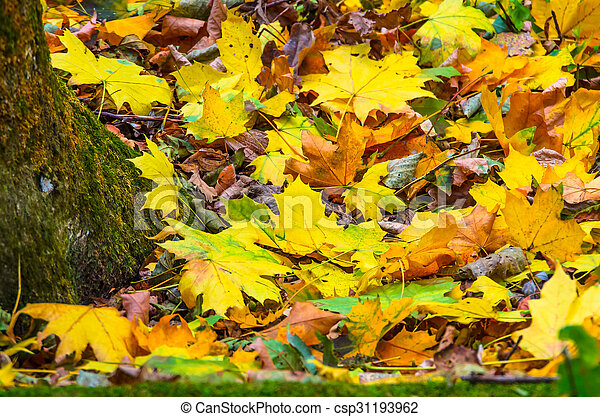 Background of autumn yellow green leaves - csp31193962