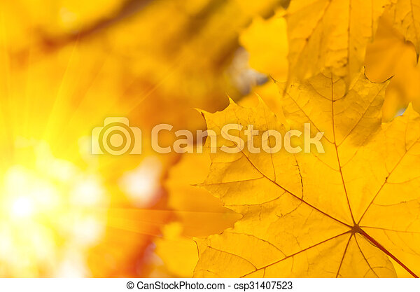 Background of autumn yellow green leaves - csp31407523