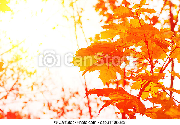 Background of autumn yellow green leaves - csp31408823
