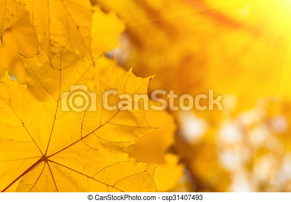 Background of autumn yellow green leaves - csp31407493