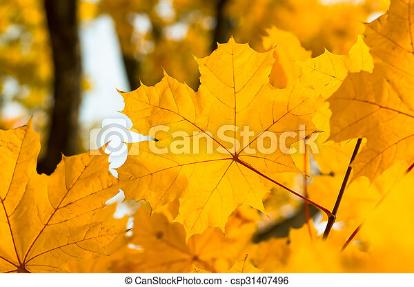 Background of autumn yellow green leaves - csp31407496