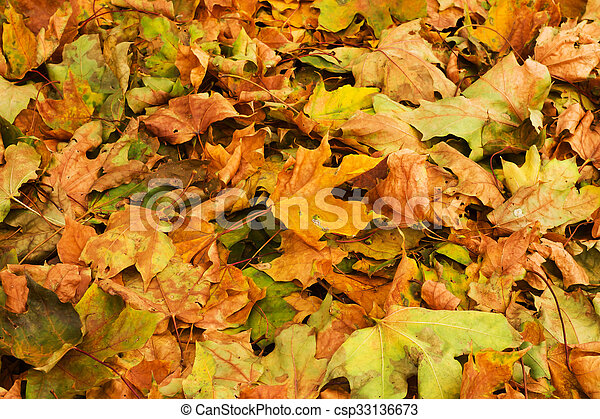 background of autumn yellow leaves - csp33136673