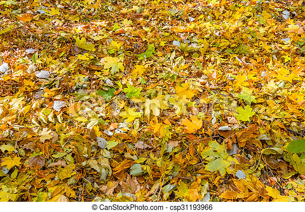 Background of autumn yellow leaves - csp31193966