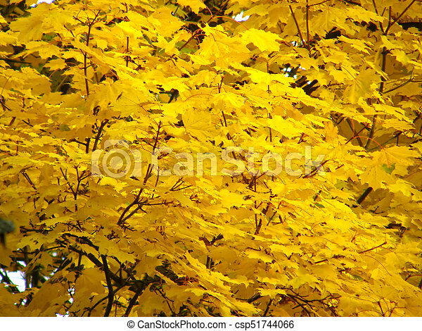 Background of autumn yellow leaves - csp51744066